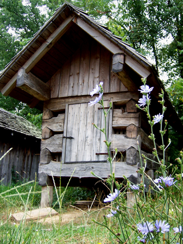 Chicory and Corn Crib 5