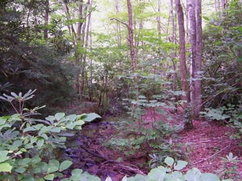 Creek and RedHumus