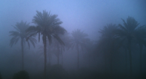 Iraqi Palms in Fog blue image