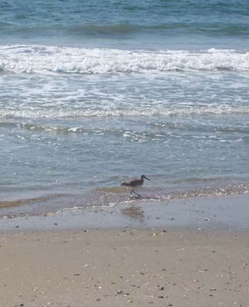 Wading Bird and Waves