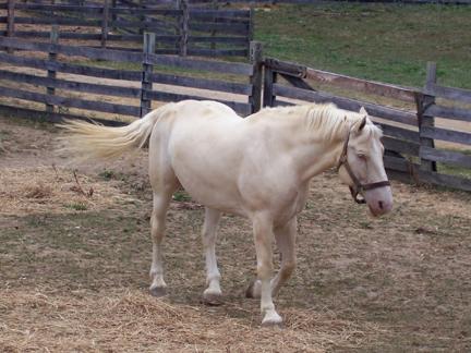 HorseWalking