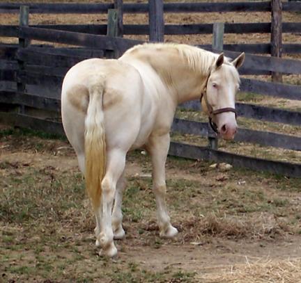 Horse'sAss